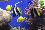 Egéralátét újrahasznosított Fellowes Earth Series optikai egerekhez, tengeri halak
